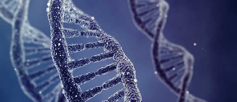 DNA-2-3-4